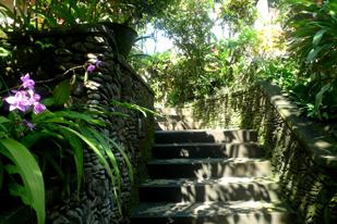 Bali green.jpg