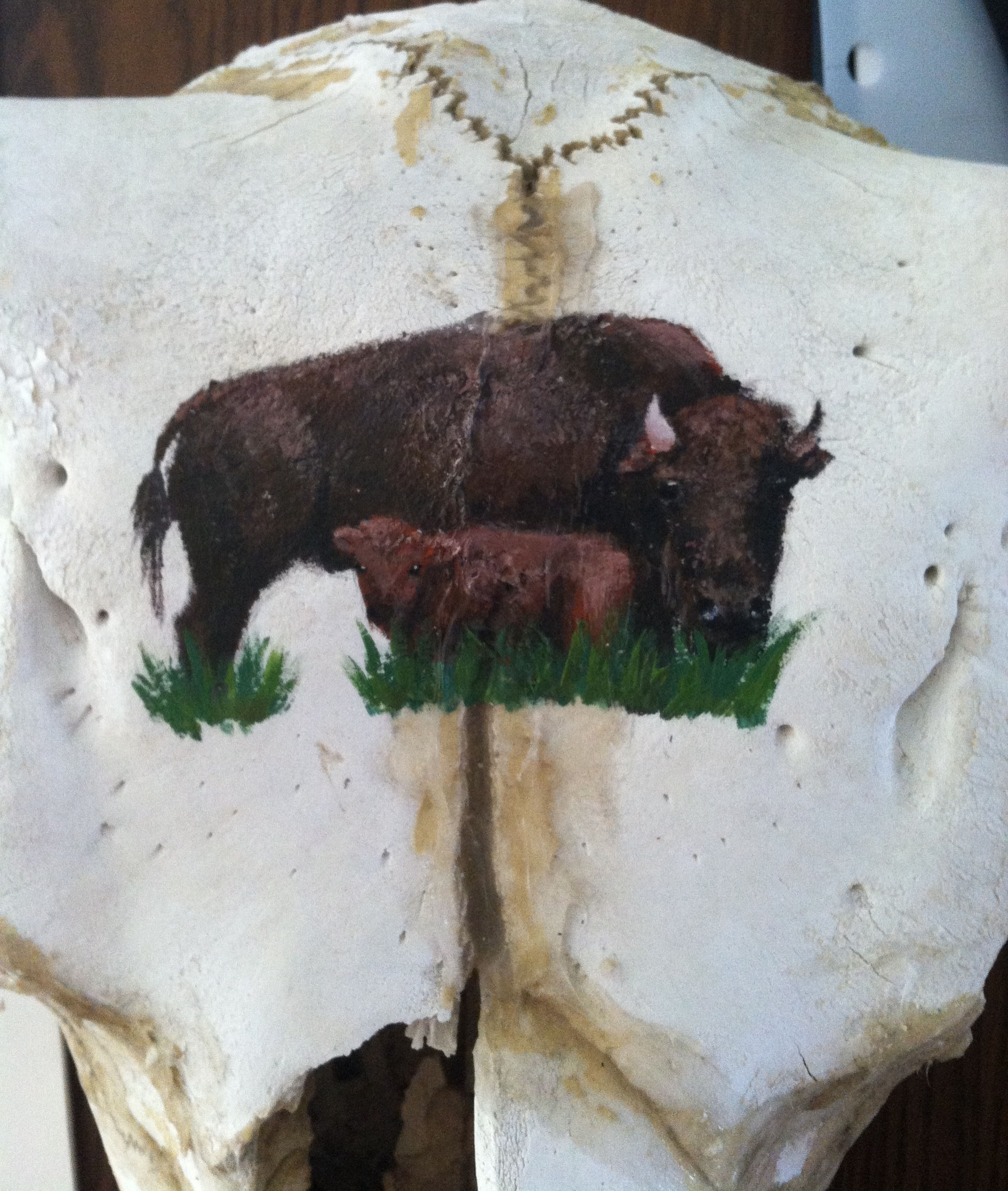 Buffalo Painting. Acrylic on buffalo skull. 2014.