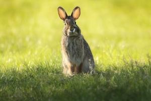 I'm ALL ears....go ahead and teach me.