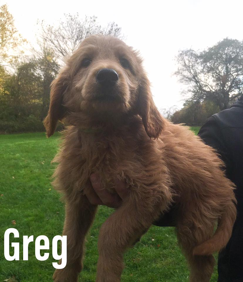 Greg - SOLD!