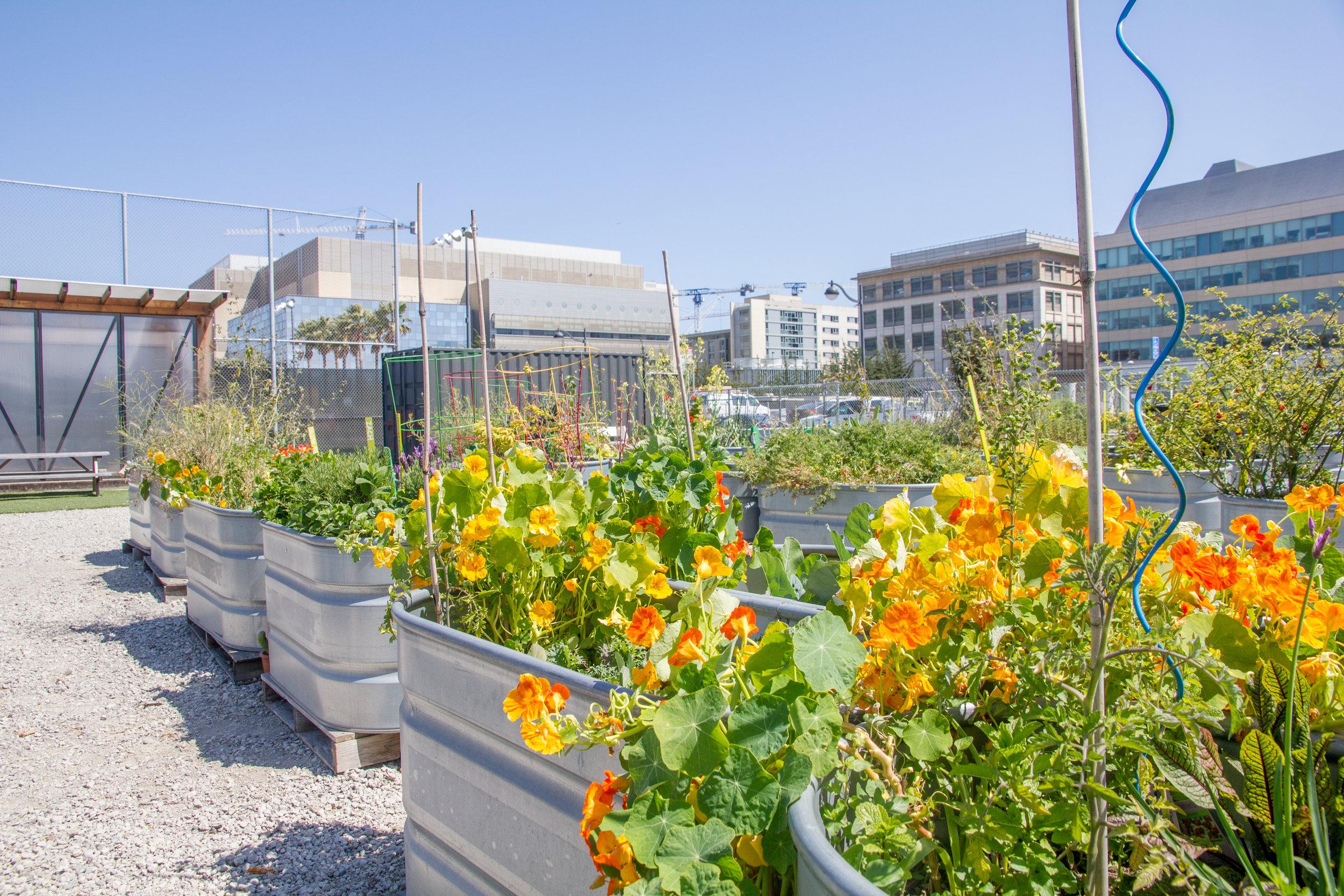 Parklab Community Garden