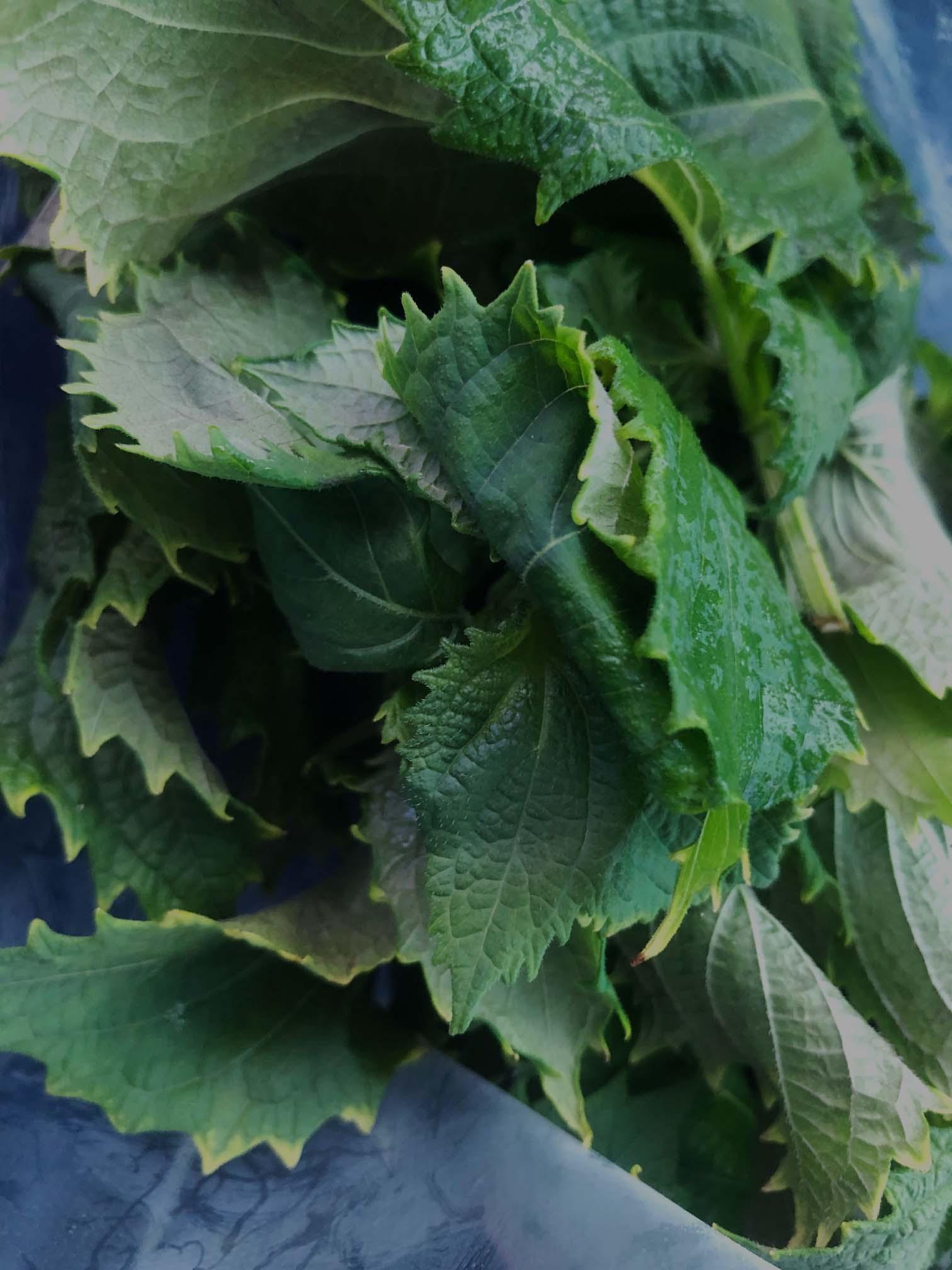 Shiso from FarmPod used in the Beef Tataki