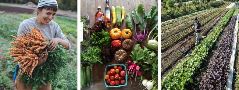 Market Gardening 3.0 Photo 2.png