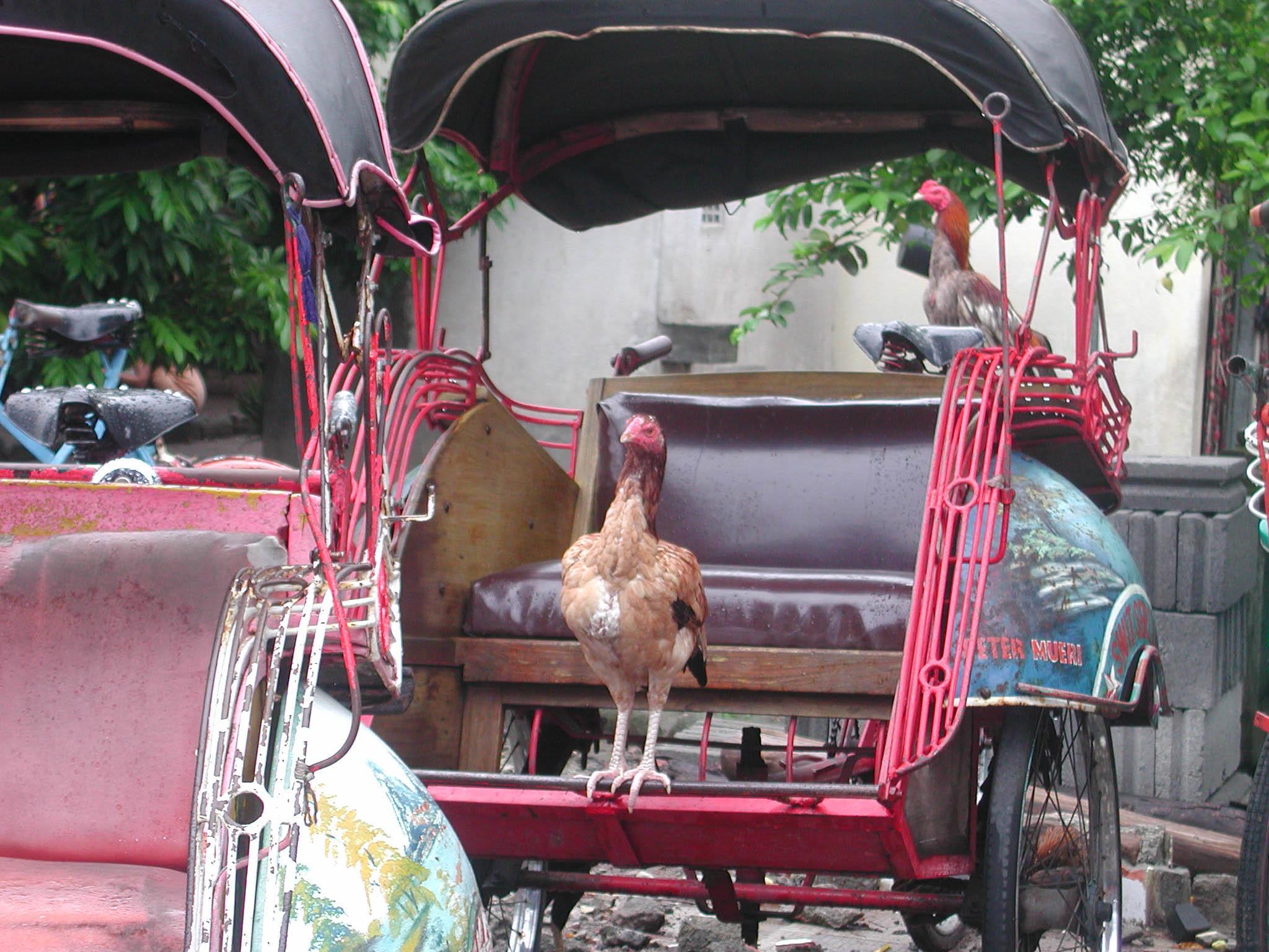 roosters on beceks.jpg