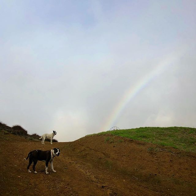 🐾🐾+🌈=🥰 #mykindofmath  #malibu  #dogsofinstagram  #happyplace  #xanabu  #california