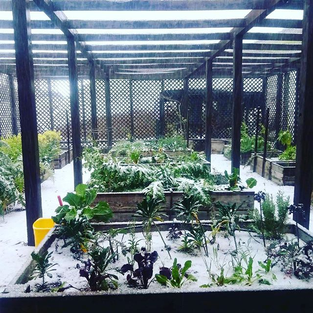 Okay wait!  What is going on in my garden???! ❄️⛄️❄️⛄️❄️⛄️❄️⛄️ 📷 cred. @taransmyth  #thisismalibu  #itssnowinginmalibu  #snowgarden