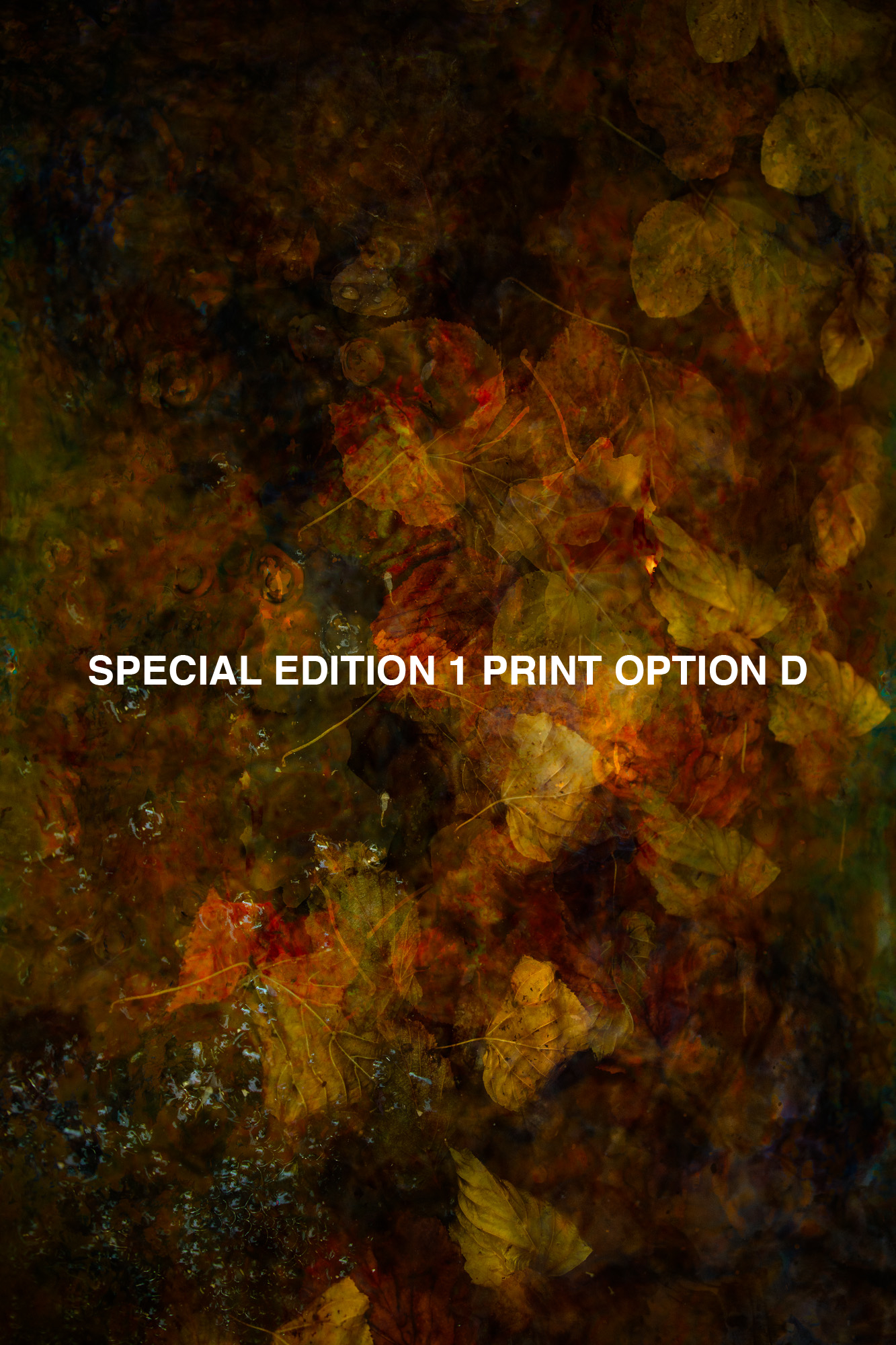SPECIAL EDITION 1 PRINT D