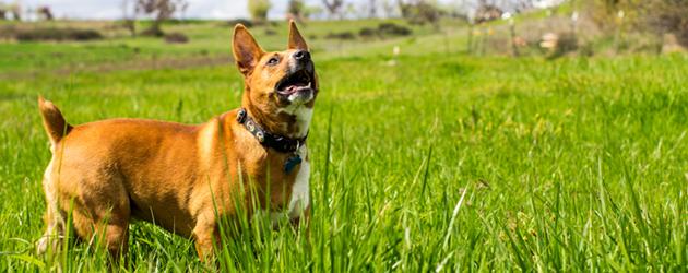 Happy Dog Training The Laughing Tail Vancouver Washington
