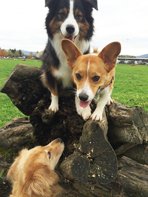 3DogPile_300x400.png