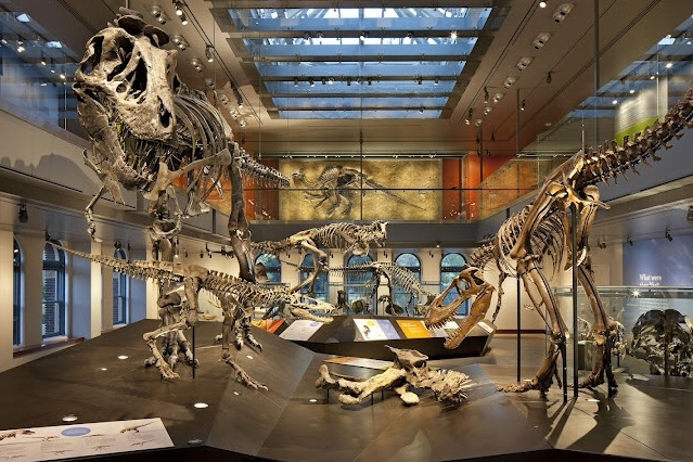American Alliance of Museums -