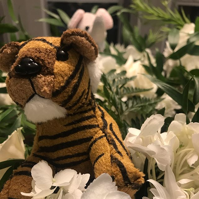 Lions and tigers and bears, oh my!  We just live it when a prior client calls and asks us to create cute centerpieces for her baby shower!  Added bonus was our little helper. . #parkerhamilton #happyclients #dfwbabyshower #whiskeycake #jungletheme #dfwplanner #danekedesigns #mkeventstx