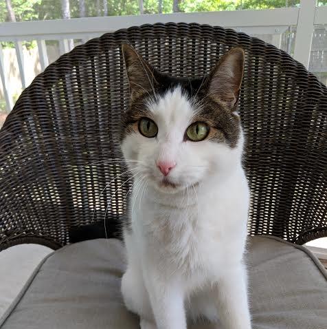 Meet Silo