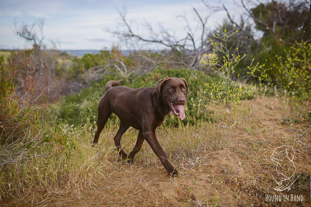 hound_in_hand_adelaide_pet_photography