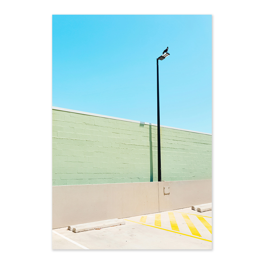 Burleigh-bird-daniel-hine-sunshine-coast-fine-art-photographer.jpg