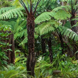Plant a Tree  To help offset carbon emissions from air travel we make regular contributions to the Native Forest Restoration Trust, an initiative to protect and enhance New Zealand's native forest reserves.