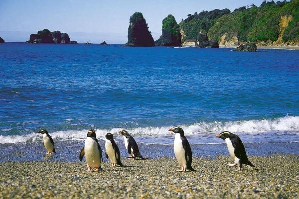 LM - penguins 2.jpg
