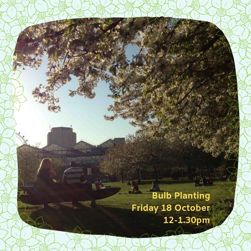Bulb Planting Friday 18 October 12-1.30pm.png