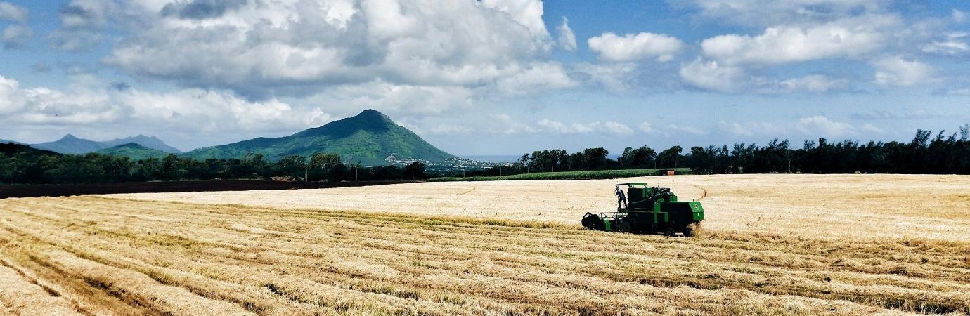 Rice harvest Cascavelle.jpg