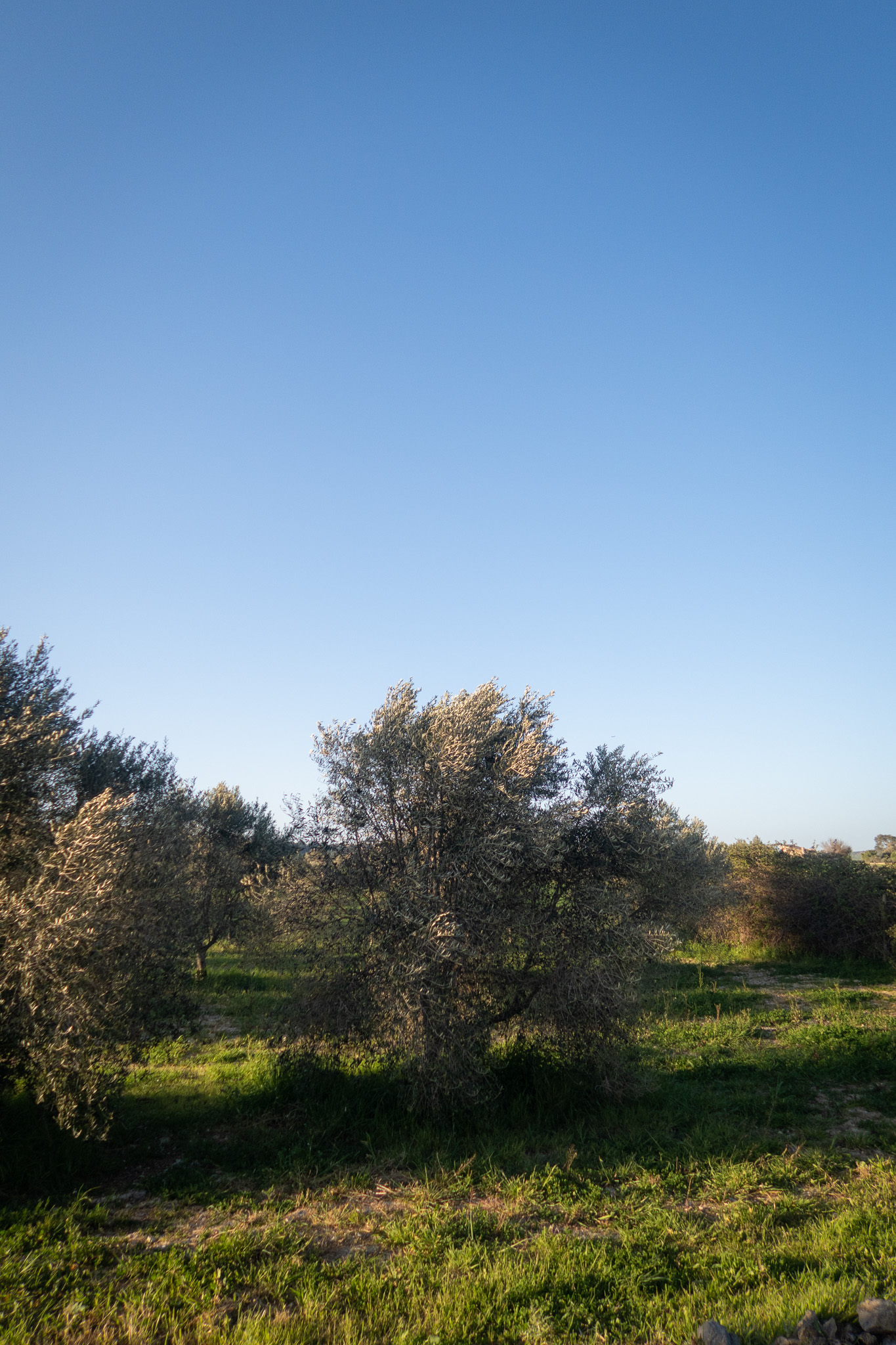 ida-carr-blogg-2-2.jpg