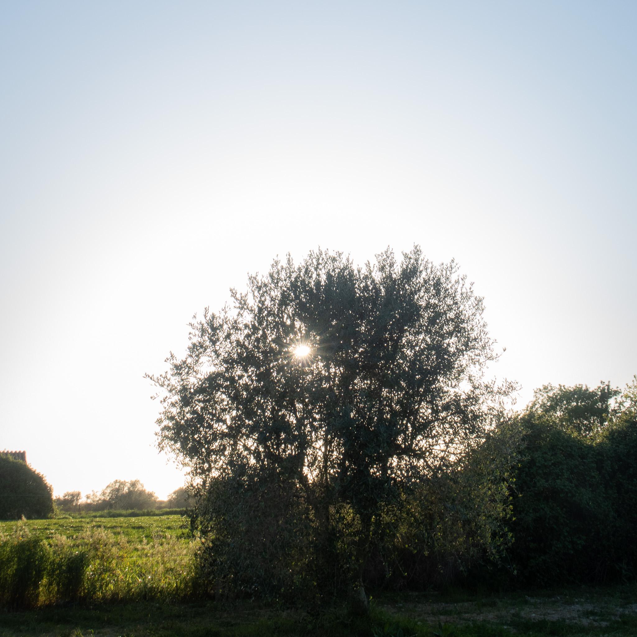 ida-carr-blogg-2-9.jpg