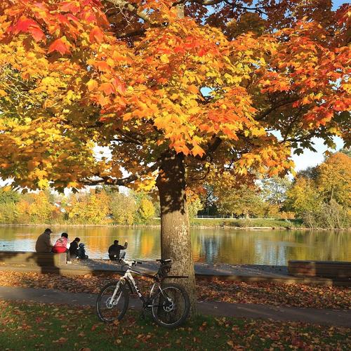 Acer - Esdoorn  Hoogte: 5 - 7 m  Kleur: Verschillend  Wintergroen: Nee  Bloeiperiode: Niet van toepassing