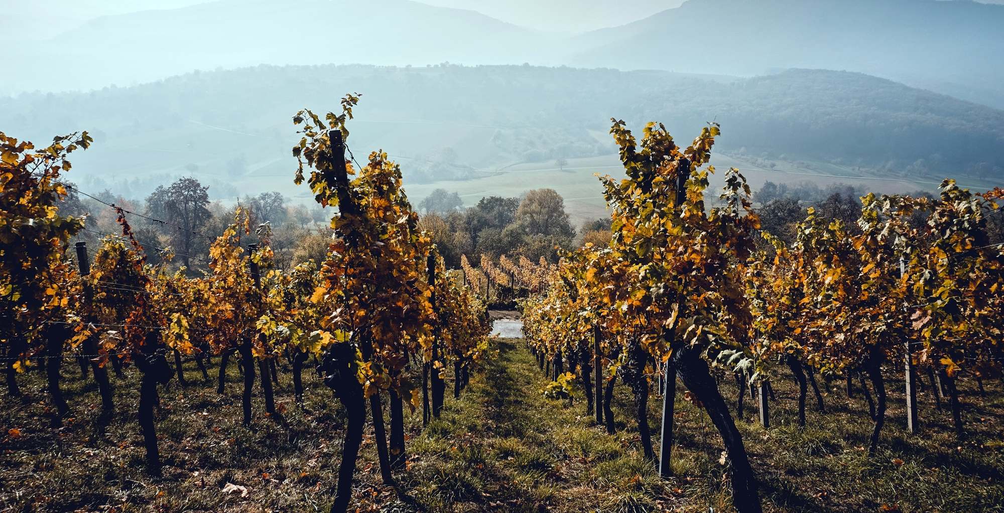 Two Wine Valleys. Two Days. Endless Memories. - THE VINO VALLEYS WINE TOUR