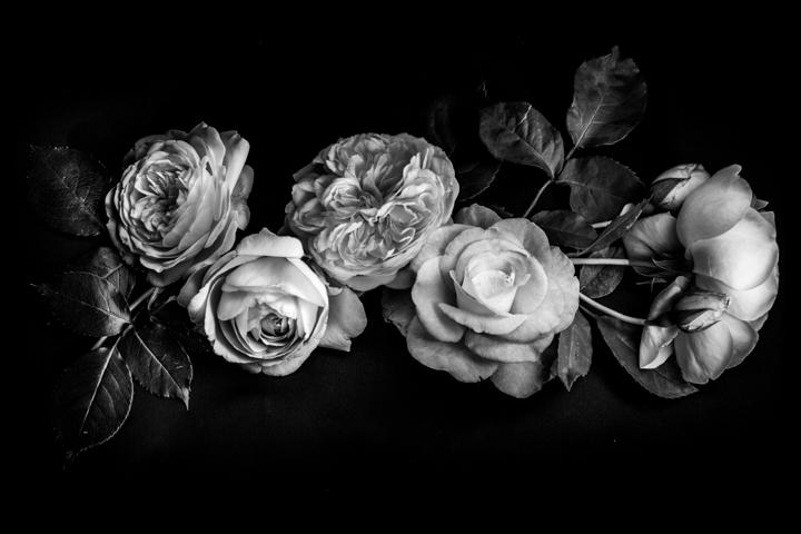 Black and white-21.jpg