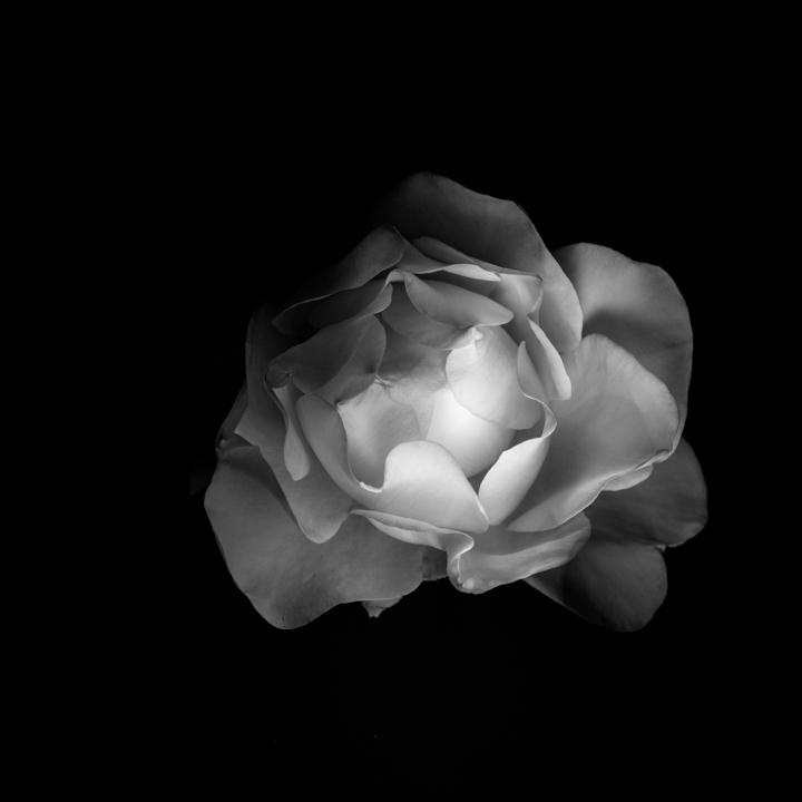 Black and white-25.jpg