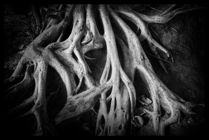 Black and white-26.jpg