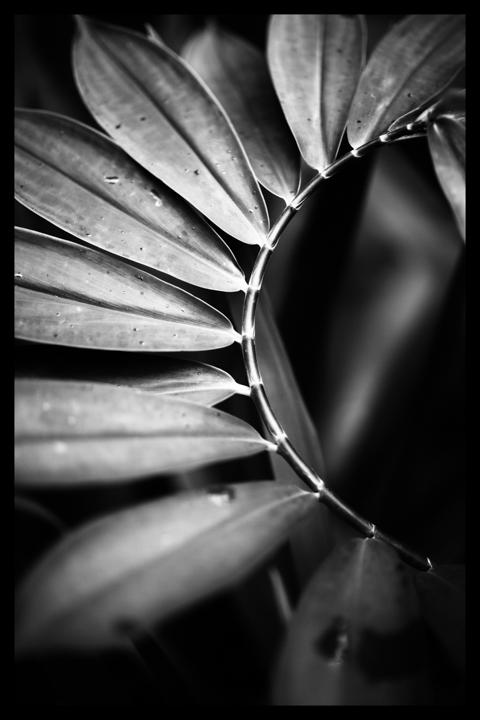 Black and white-27.jpg