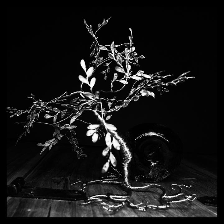 Black and white-44.jpg