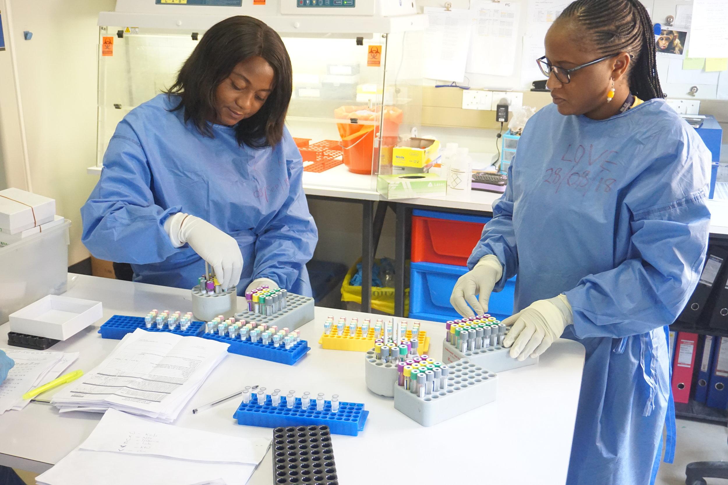 TREATS laboratory staff at Zambart House, Lusaka, process some of the first blood samples
