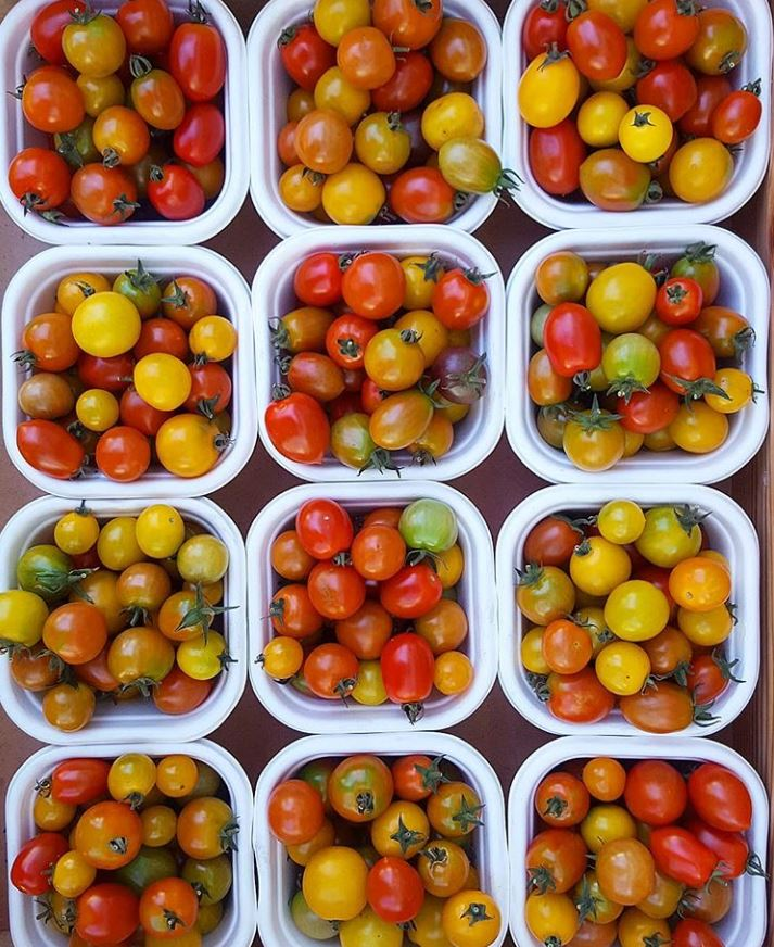 TOMATO - Cherry Medley