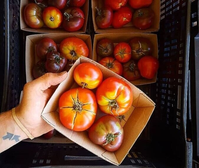 tomatoes+heirloom+2.jpg