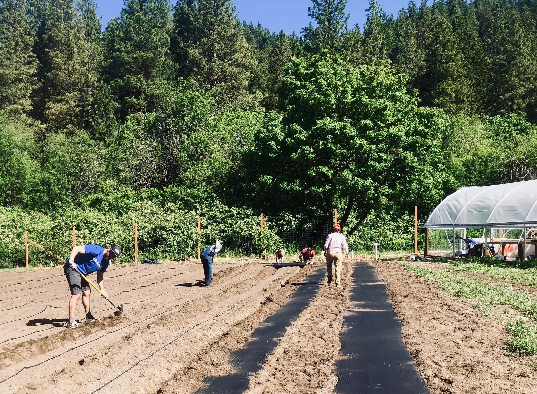 Snowgrass Farm volunteers prepping tomato beds, 2018