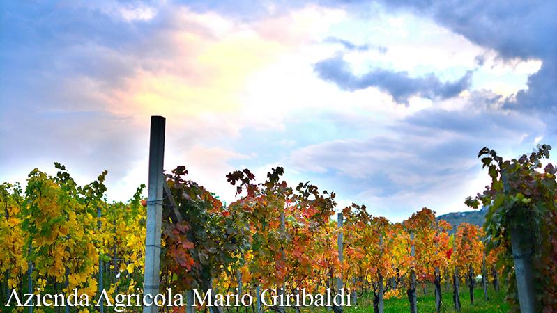 GIRIBALDI, RODELLO