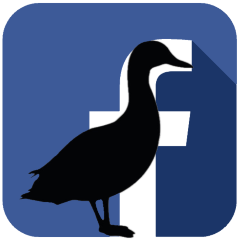 Black Duck Moments For Recovery - Come join our Facebook group, Black Duck Moments for Recovery, for support, guidance, and information.