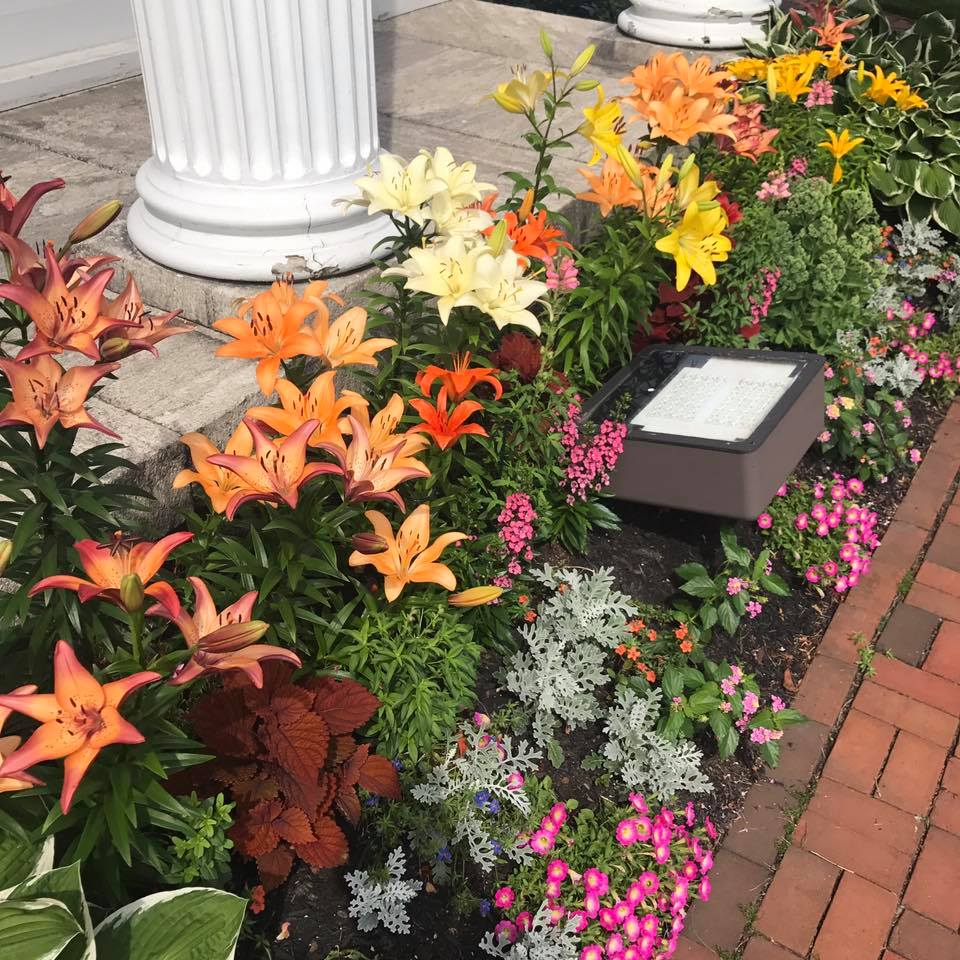 Lilies were the main attraction in the front portico flower beds during the summer of 2018! Photo: Mary Bowen, Asa Waters Mansion.