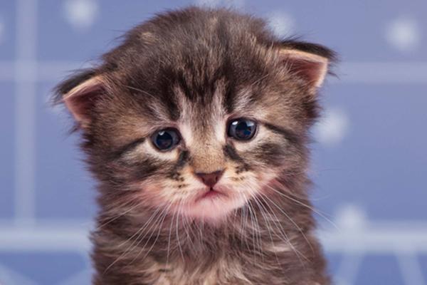 Sad-young-brown-tabby-kitten.jpg
