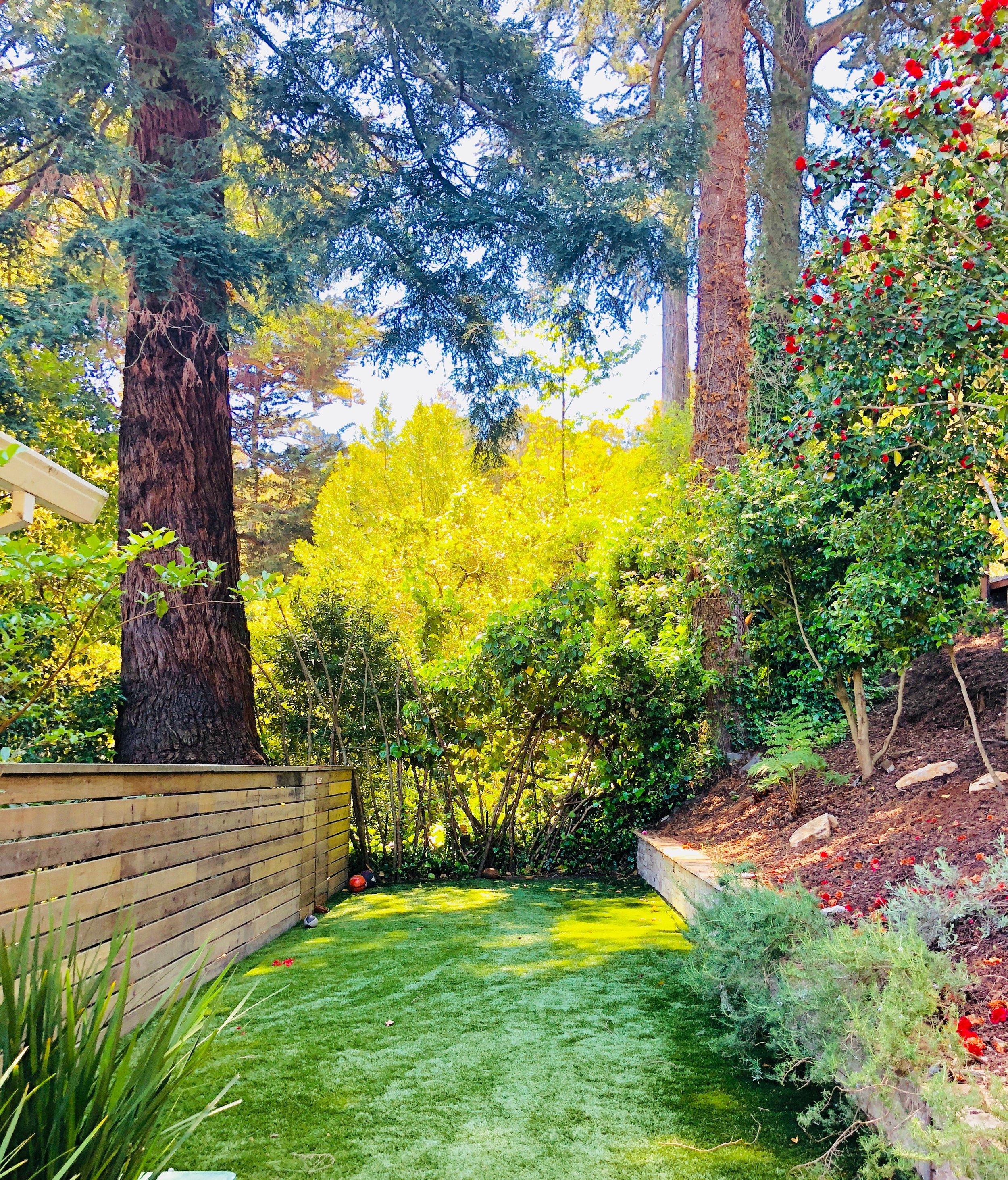 Our gorgeous, lush, new turf.