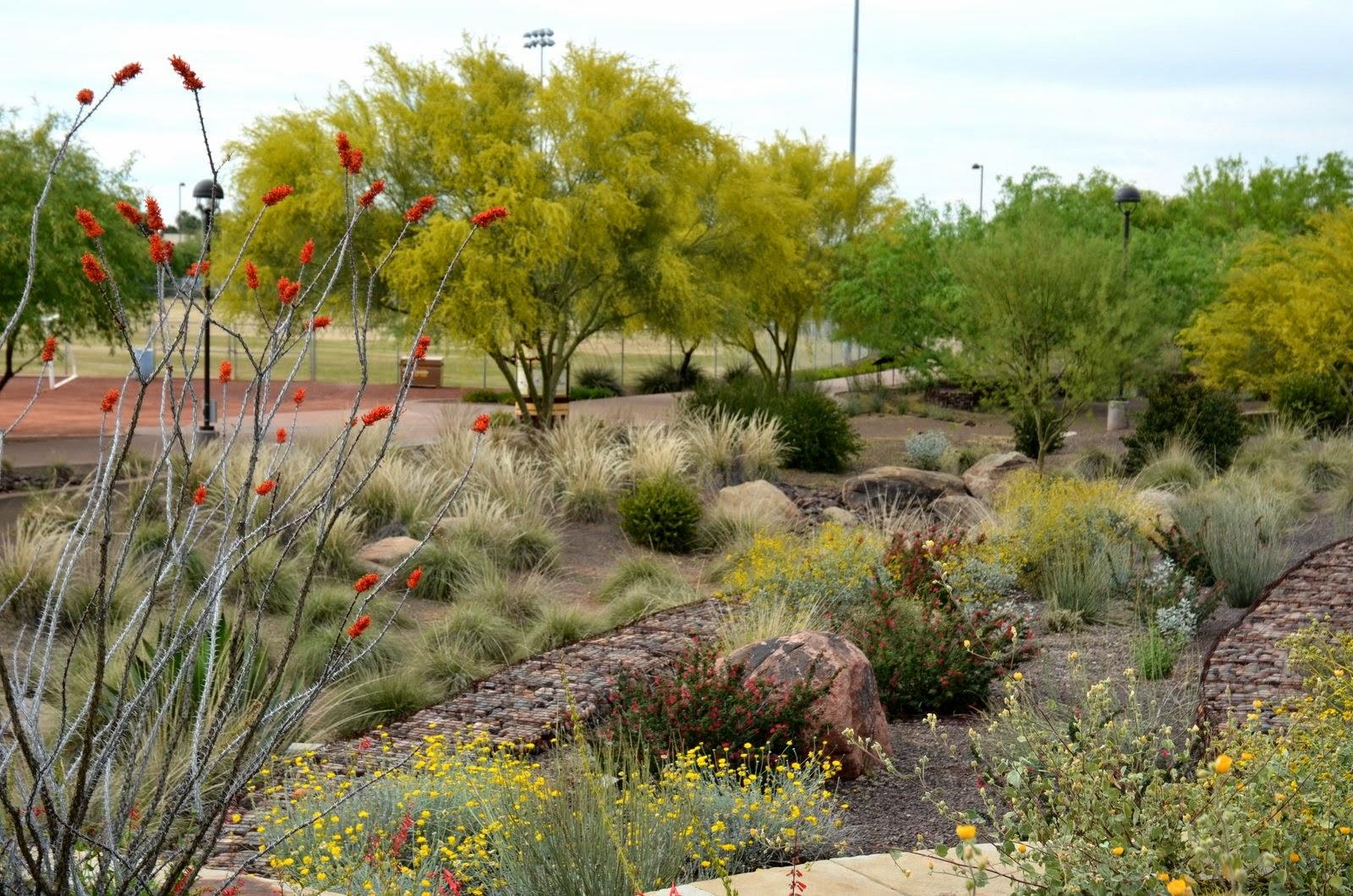 Photo: AZ Plant Lady