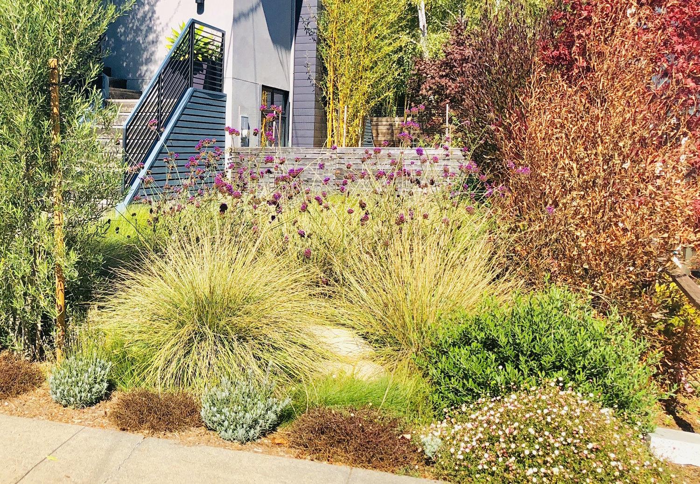Botanical Yardzen Online Landscape Design