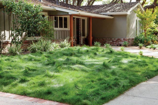Just look at that luscious yet eco-conscious lawn.