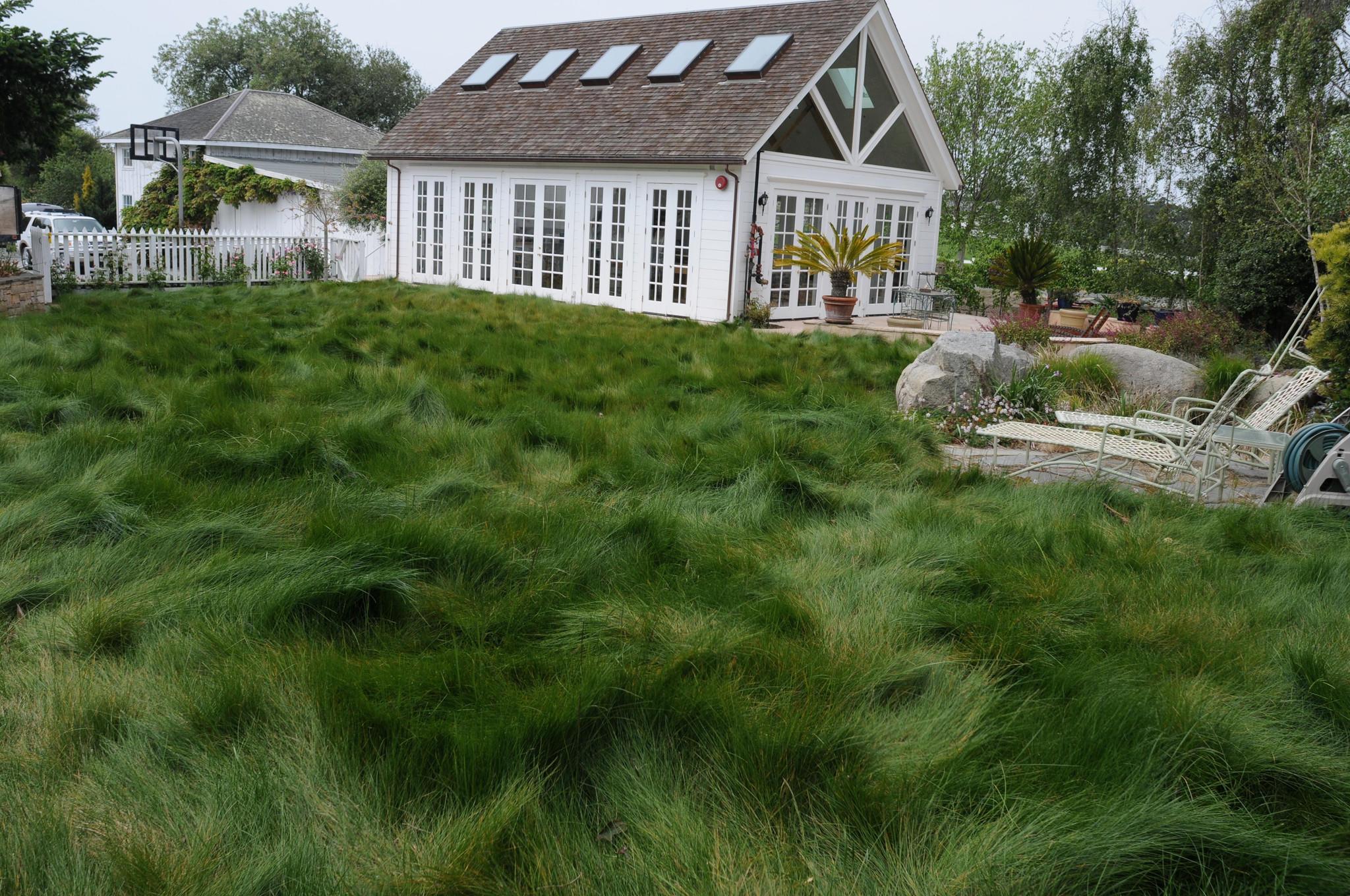 la-hm-water-wise-grass-20150715-002.jpg