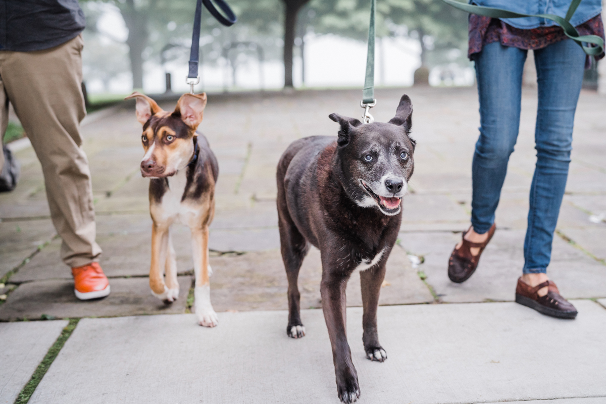 two_birds_photography_jacob_Moreland_westmont_chicago_photographer_dog_pet_portraits_engagement_promontory_point_10.jpg