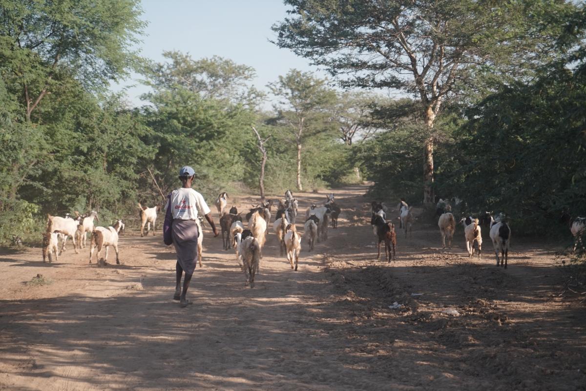 Myanmar_58-1200x801.jpg