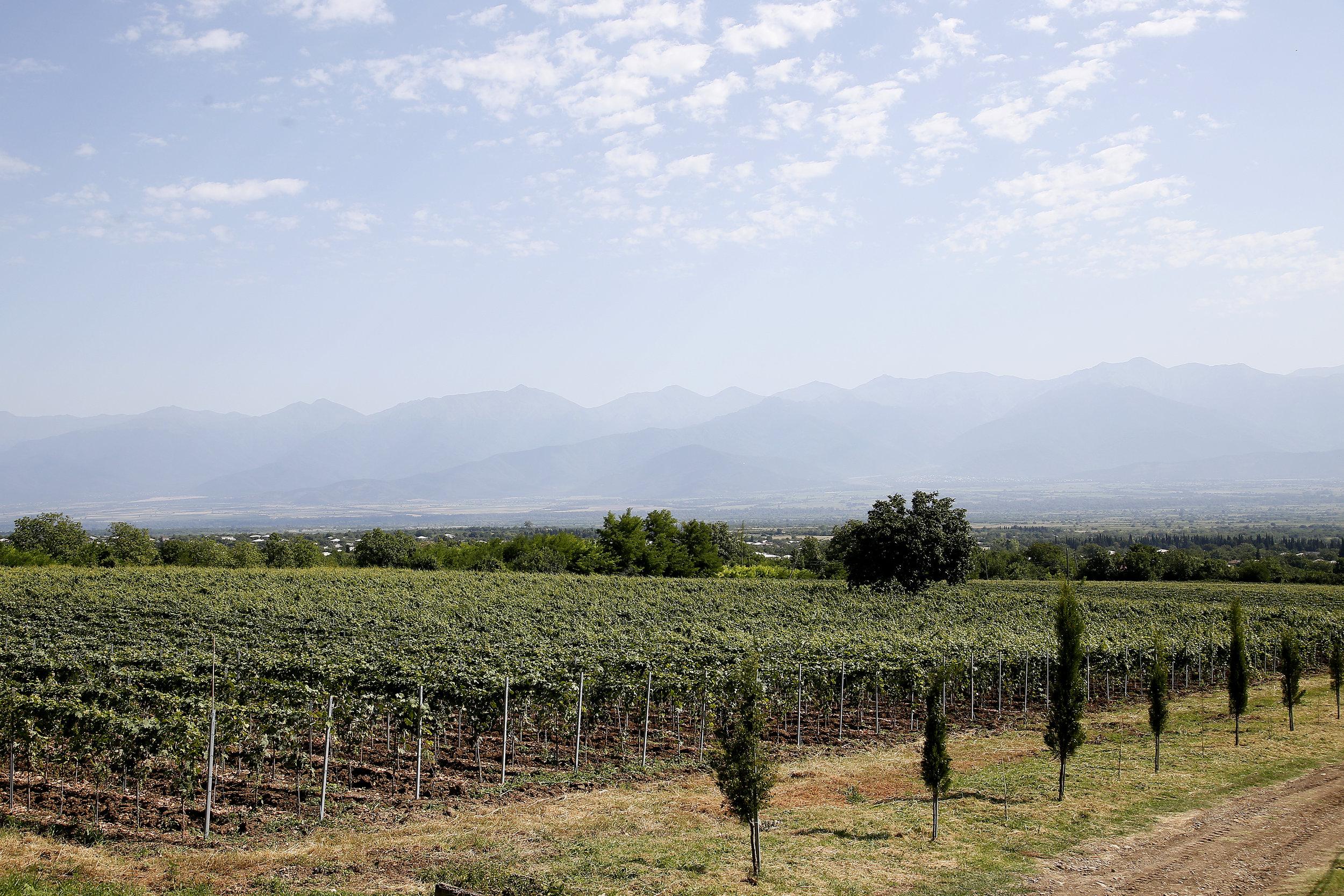 Panorama over the vineyard at Vazisubani in Kakheti, Georgia