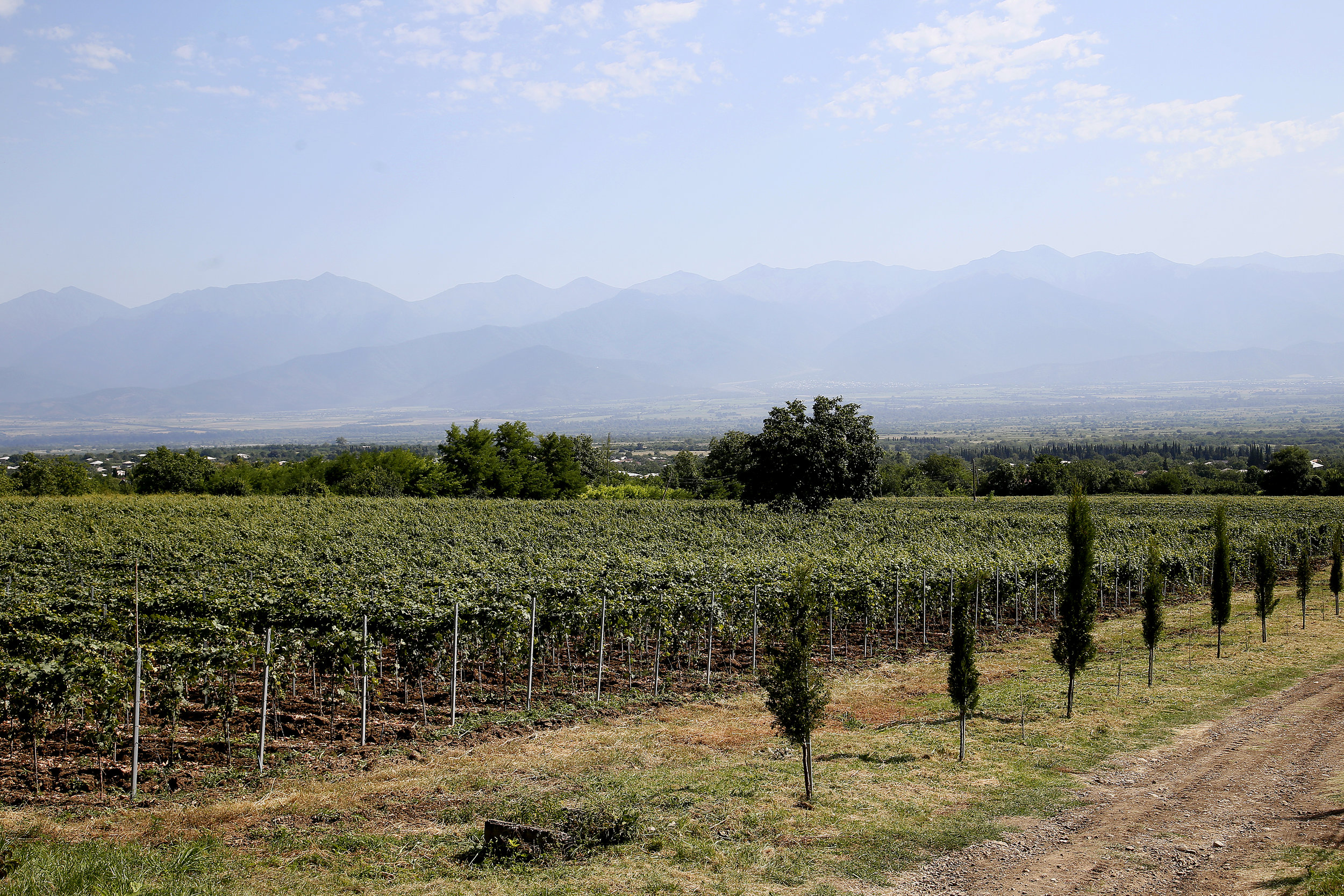 The vineyard is used for bio and biodynamic wine from Georgia
