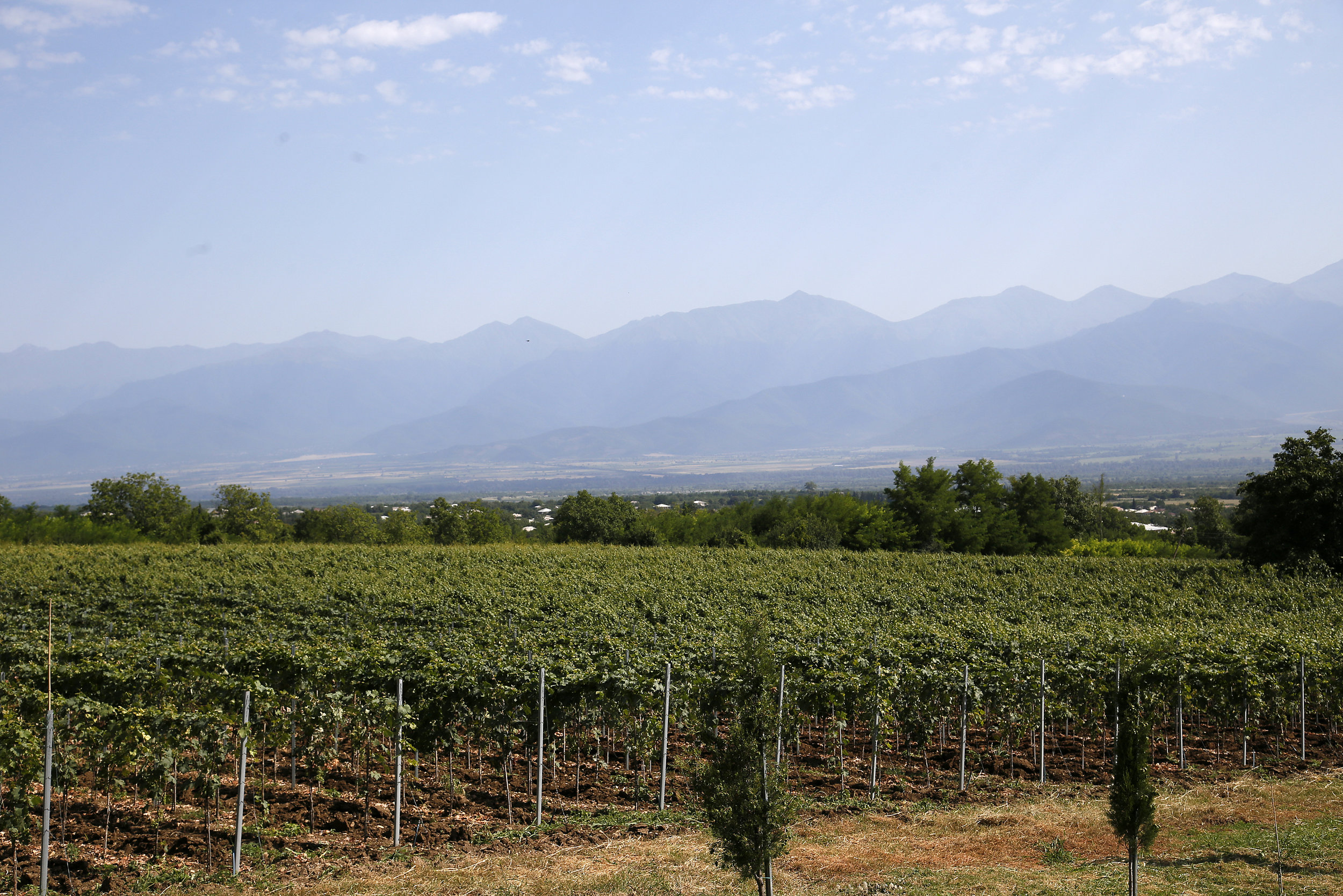 Overlooking the vineyard where organic grapes are grown for premium Georgian wine