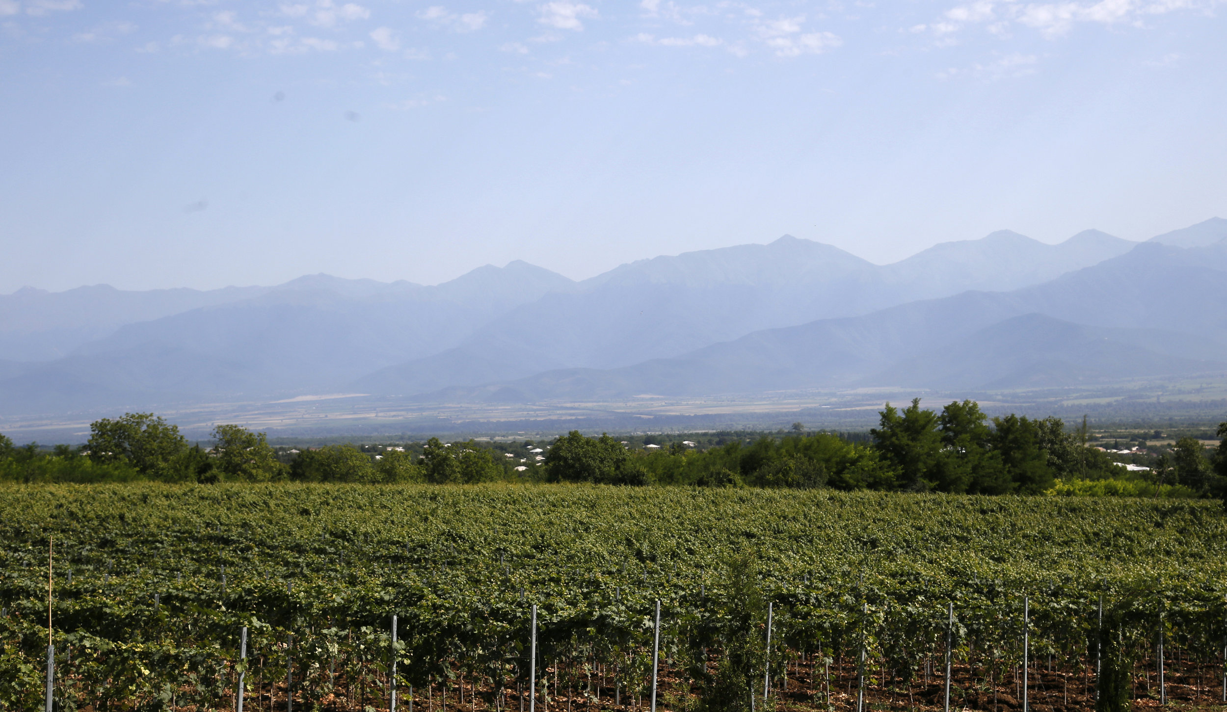 Wines similar to Kindzmarauli wine are made at this vineyard